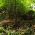 volkonskoe-ushele-prirodnaya-dostoprimechatelnost-sochi