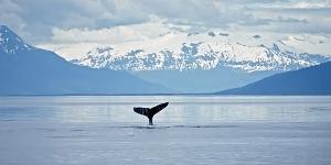 Аляска - штат полночного солнца