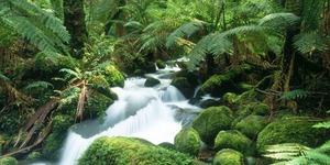 Любовь и экстрим в джунглях