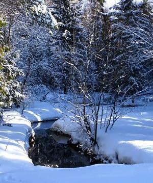 Крюковский лесопарк зимой