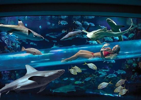 В этом бассейне можно полавать среди акул