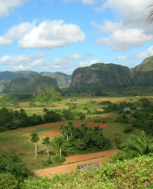 Растительность долины Виньялес на Кубе