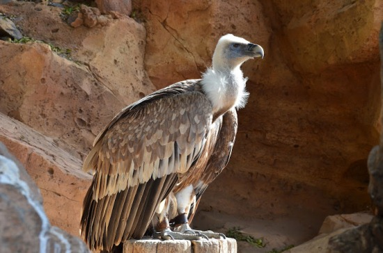 Парк орлов