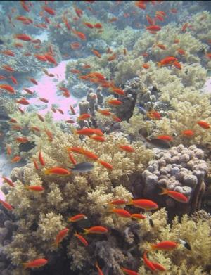 Подводный мир заповедник Рас-Мохаммед