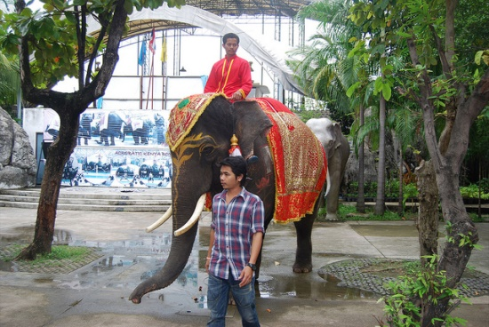 Зоопарк Дусит в Таиланде